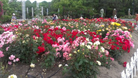 鶴舞公園1 - コピー.jpg